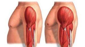 Hipertrofia muscular que es
